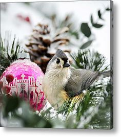Holiday Bird Titmouse Square by Christina Rollo © www.rollosphotos.com. Close-up photograph of a cute Tufted Titmouse in the snow with holiday Christmas ornament. #bird #winter #rollosphotos #photography