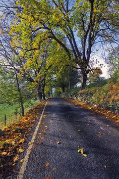 Walks In The Autumn