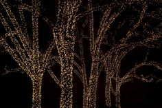 Net lighting net lights for trees for outdoor parties! Tree Lighting, Cool Lighting, Outdoor Lighting, Outdoor Decor, Net Lights, Fairy Lights, Wedding Notes, Wedding Ideas, Lighted Branches