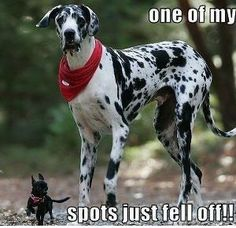 Funny Quotes about Spots