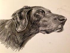 Pencil drawing of Rupert Schnauzer, Pencil Drawings, Watercolors, Schnauzers, Graphite Drawings, Pencil Art, Mini Schnauzer