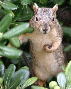 Squirrel | Flickr