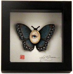 Cabinet of Curiosities Specimen no. 24 - The Blue Moth Eye Fly by Mab Graves - Gallery Nucleus