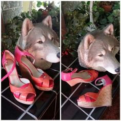 """SALEOrange, red, pink, 5"""" platform wedges  7.5 Nine West size 7 1/2, 5"""" platform wedges,orange, red, and pink,  narrow heel displacement eliminates my ability to wear them.  Inside lining torn where tag was, not noticeable, doesn't affect wearing, view pictures Nine West Shoes Platforms"""