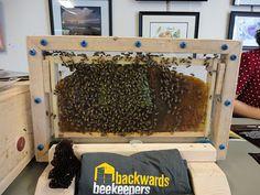 Backwards Beekeepers