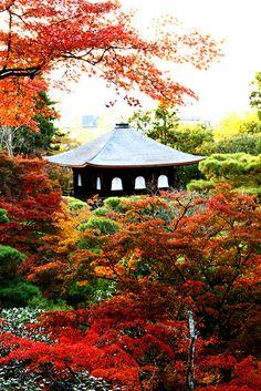 Kyoto, magic,Japan Autumn por Thatssoron no Flickr.