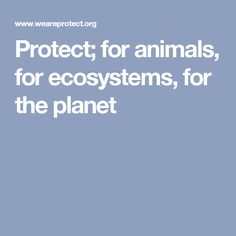 Protect; for animals, for ecosystems, for the planet
