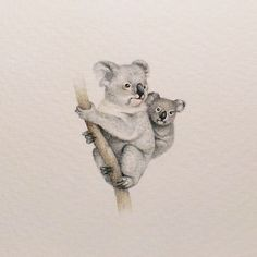 I Started Drawing Miniature Paintings Because I Did Not Have Time For Bigger Drawings And Now It's My Passion koala bear Easy People Drawings, Drawing People, Animal Paintings, Animal Drawings, Koala Tattoo, Koala Illustration, Baby Animals, Cute Animals, Image Deco