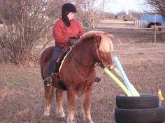 ClickRyder, Clicker Training for Horses: Obstacle Course for Horse Clicker Training