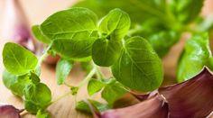 … oregano magiczne … | Medycyna naturalna, nasze zdrowie, fizyczność i duchowość