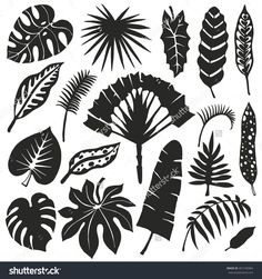 stock-vector-tropical-palm-leaves-set-vector-leaf-silhouette-tropical-leaves-isolated-summer-vector-monster-401740384.jpg (1500×1600)