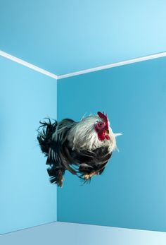 "Mitch payne Photography - ""poultry in motion"" - very bad sense of humor!  ;)"