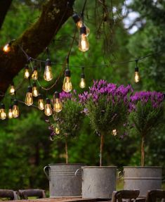 Topiary Love and tips on how to care for them Cottage Chic, French Country Cottage, Country Living, French Countryside, Country Decor, Country Style, Twinkle Lights, Twinkle Twinkle, Garden Projects