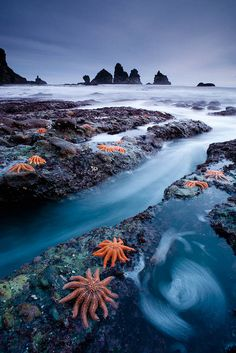 West Coast starfish colony, New Zealand by Simon East on Flickr.