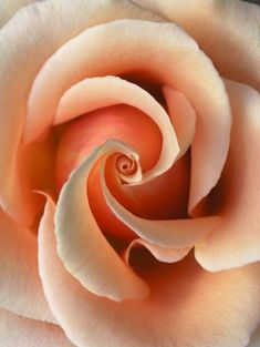 Colors   Peach by teradeeg