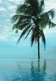 Paradise.