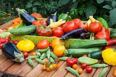 When to plant vegetable garden
