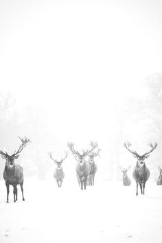 Creative Photography, Winter, Beauty, Deer, and Snow image ideas & inspiration on Designspiration Beautiful Creatures, Animals Beautiful, Cute Animals, Wild Animals, Baby Animals, B&w Tumblr, Illusion Fotografie, Animals Tattoo, Foto Picture