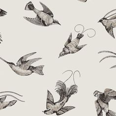 Papier peint Tropical Birds - Cole and Son Botanical Wallpaper, Bird Wallpaper, Wallpaper Online, White Wallpaper, Pattern Wallpaper, Wallpaper Ideas, Beautiful Wallpaper, Dining Room Wallpaper, Kitchen Wallpaper