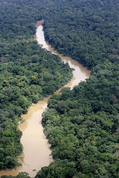 Ecuador rainforest | Germany Takes Lead in Saving Ecuador's Rainforest