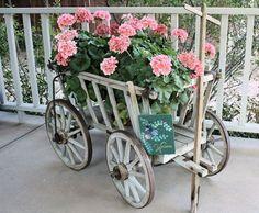 Pink Geraniums ~ I love the wagon!
