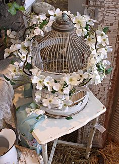 pretty bird cage