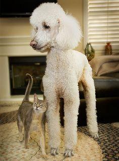 National Animal Poison Control Helpline Warns of Poisoning Hazard Associated with Jerky Treats