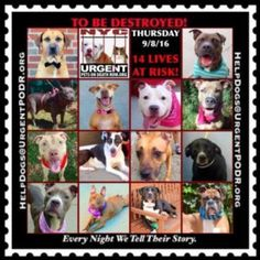 14 SWEET PRECIOUS PETS 2 B DESTROYED TOMORROW! PLEASE SEE & READ THEIR STORIES. EVERY NIGHT WE TELL THEIR STORIES.