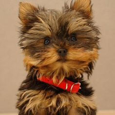 I want this dog.