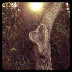 adventure journal hearts in nature branch
