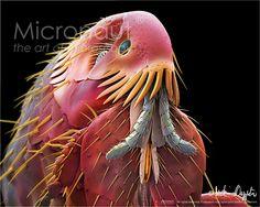 electron microscope color - Google Search