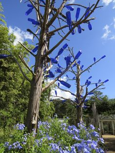 Towering indigo blue bottle trees, which, according to African-American folklore, absorb evil spirits, glimmer against the blue sky at Orange, Texas', Shangri La Botanical Gardens and Nature Center. Photo by Jim Twardowski.