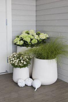 Blomstrende sensommer, høstblomster,