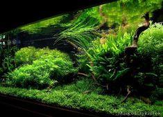 hybridtheory #aquascape