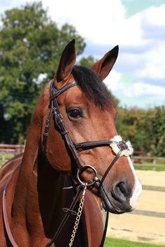 www.horsealot.com, the equestrian social network for riders   Equestrian Fashion : bridon Pénélope Leprévost.