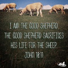 Air1 Bible Verse of the Day - I am the good shepherd.  The good shepherd sacrifices his life for the sheep.  - John 10:11