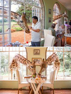 Giraffe Manor (Nairóbi, Quênia)