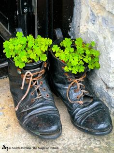 old shoes filled with green