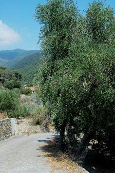 Vallebona (IM)   Località Musso Inferiore