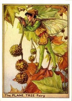 Plane Tree Flower Fairy Vintage Print by Cicely Mary Barker, first published in London by Blackie, 1940 in Flower Fairies of the Trees.