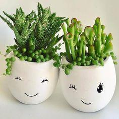 Crassula Ovata, Crassula Succulent, Succulent Pots, Succulent Gardening, Succulent Care, Succulent Landscaping, Succulent Arrangements, Landscaping Ideas, Organic Gardening