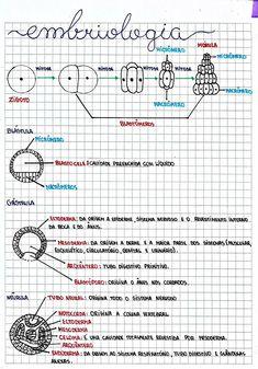 Embriologia I