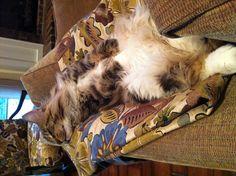 Who doesn't love a sleepy kitty?