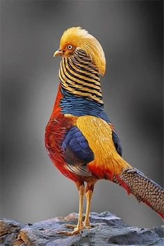 colorful bird photography by Froy Kantida http://webneel.com/25-most-beautiful-bird-photography-examples-and-tips-photographers | Design Inspiration http://webneel.com | Follow us www.pinterest.com/webneel