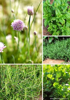 How to Grow a Culinary Herb Garden