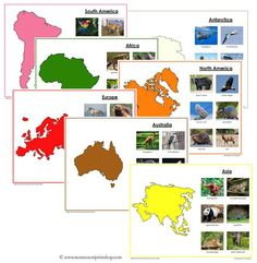 Animals of the Continents - Montessori geography cards
