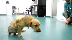 INCREDIBLE CRUELTY ! HIS FAMILY DUMPED HIM AFTER BEANS GOT PARALYSED IN A CAR ACCIDENT !!!! HELP US SAVE BEANS !
