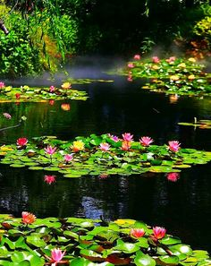 Love Garden, Home And Garden, Small Water Gardens, Natural Swimming Ponds, Nature View, Lily Pond, Fantasy Landscape, Water Plants, Water Lilies