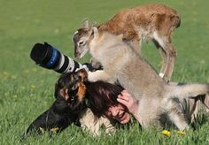 A friendly attack by stars of her photography shoot