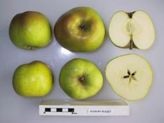 Roxbury Russet is generally recognised to be the oldest apple variety which originated in North America, and its history can be traced back to the colonial era.  It is very probably a seedling of an apple variety brought over by early settlers from Europe. (Orange Pippin).